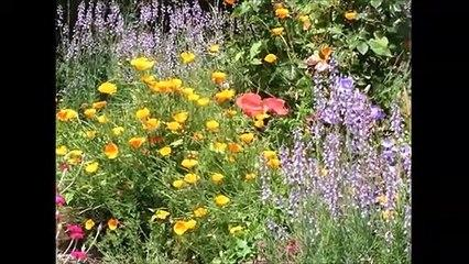 Flowers video with 856Hz vibrating music for healing your aches and migraine |  Video de flores con