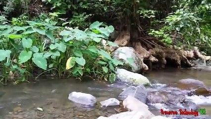 Primitive_Technology_-_Eating_delicious_-_Cacth_and_cooking_fish