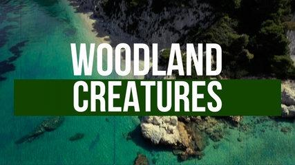 Andreu Presas Ft. Space Taxi - Woodland Creatures - Official Lyric Video